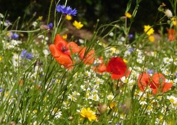 🌿 Célébration du printemps 🌿  Rencontre avec une paysanne-herboriste